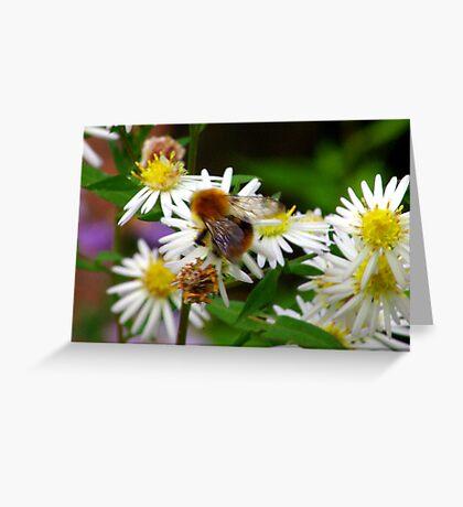 Nectar Gatherer Greeting Card