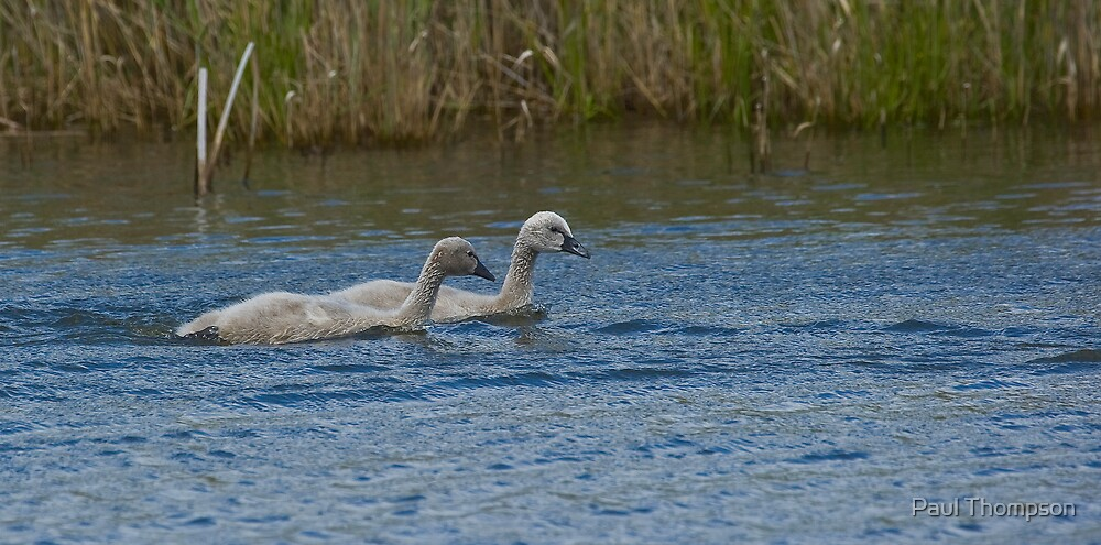 Ugly Ducklings by Paul Thompson