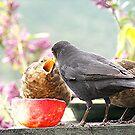 Blackbirds........more please.......!!! by Roy  Massicks