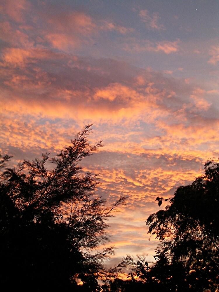 Summer sunset 2 by vanessavaughan