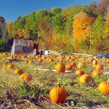 Pumpkin Patch by biriart