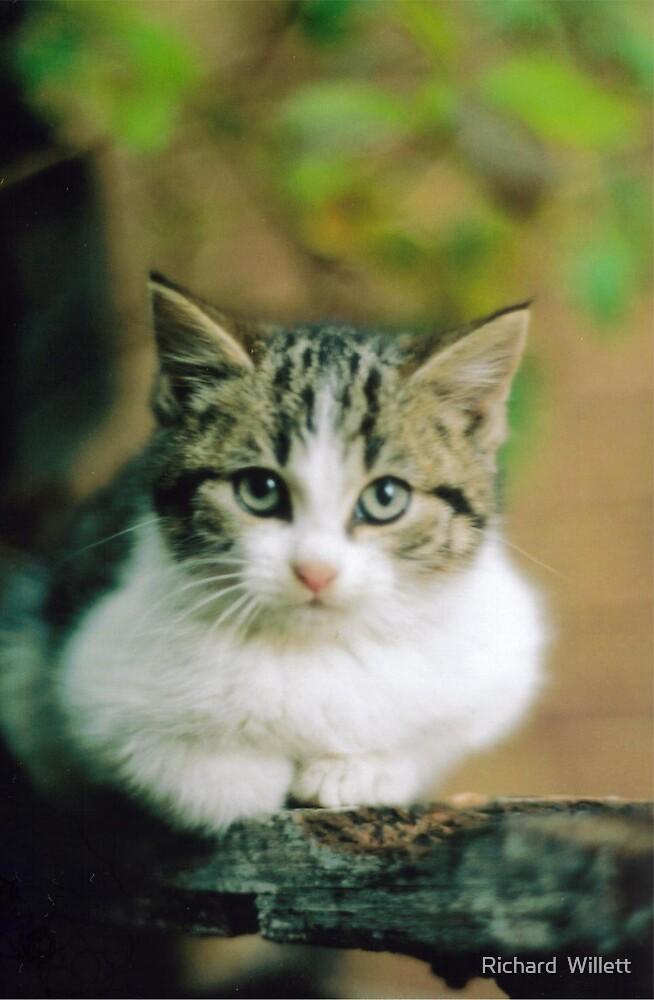 Cats 3  by Richard  Willett