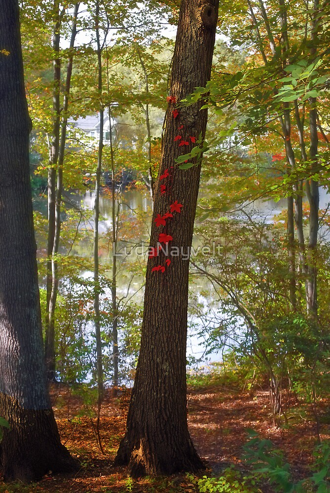 Some red leaves by LudaNayvelt