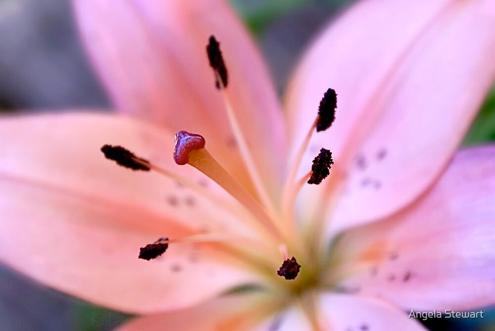 Lily by Angela Stewart