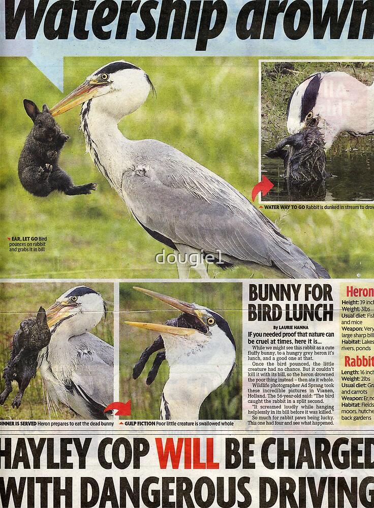 Hungry Heron 1 by dougie1