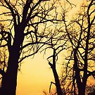 Morning Trees by FrankieCat