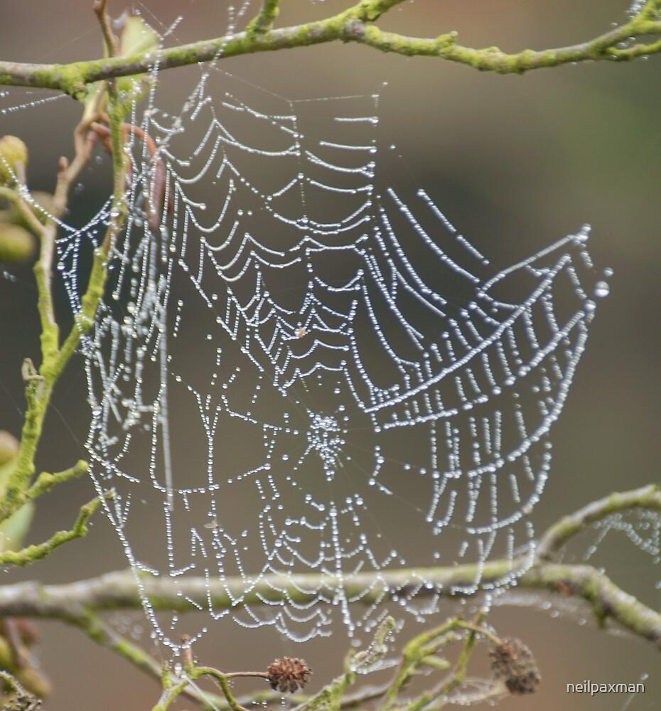Cobweb by neilpaxman