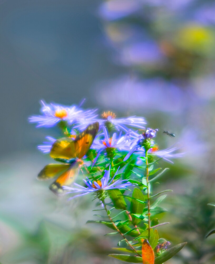 Fluttering by Michael Wolf