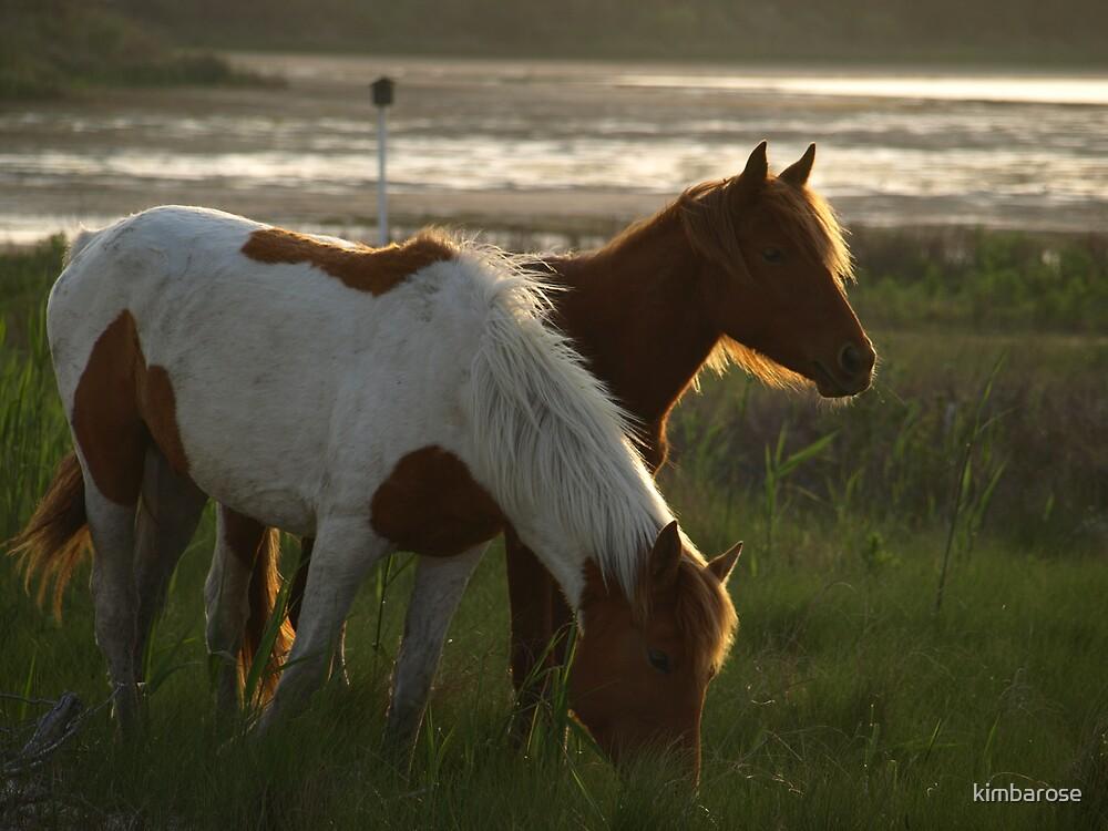 Wild Ponies by kimbarose