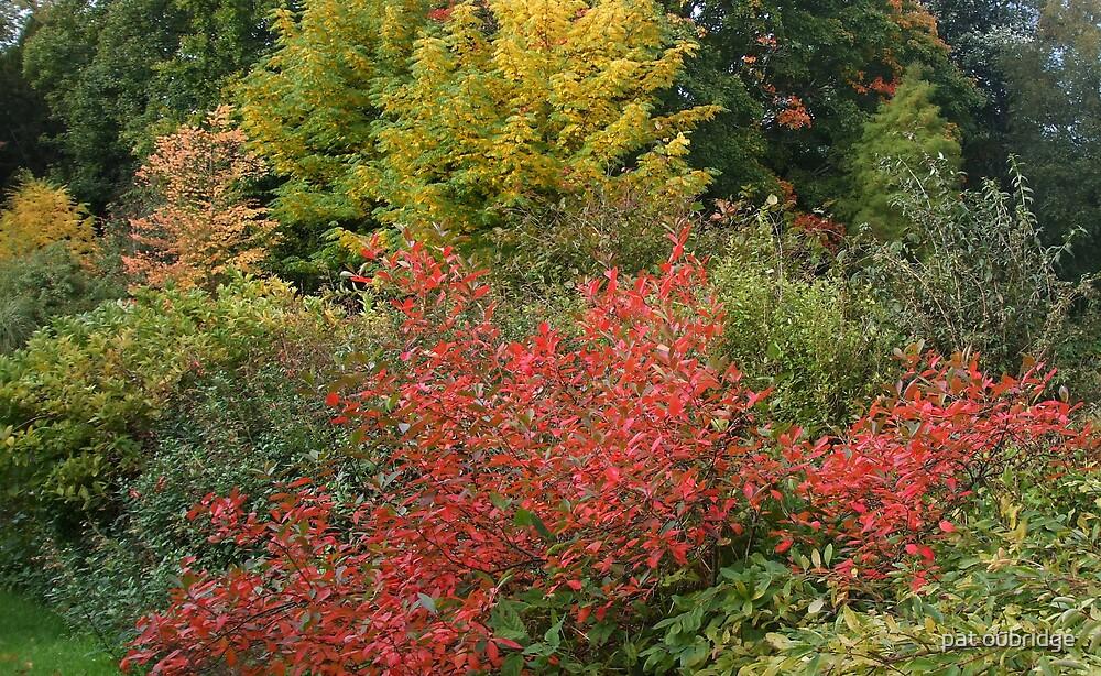 Autumn's  Fire by pat oubridge