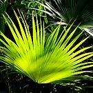 Palm Leaf - The Bloedel Floral Conservatory in Vancouver by AnnDixon