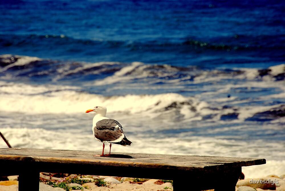 Mr Gull Kickin It In The Sun by davesdigis
