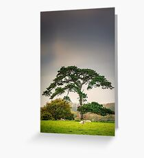 A dull day Greeting Card