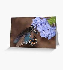One Lepidoptera Greeting Card