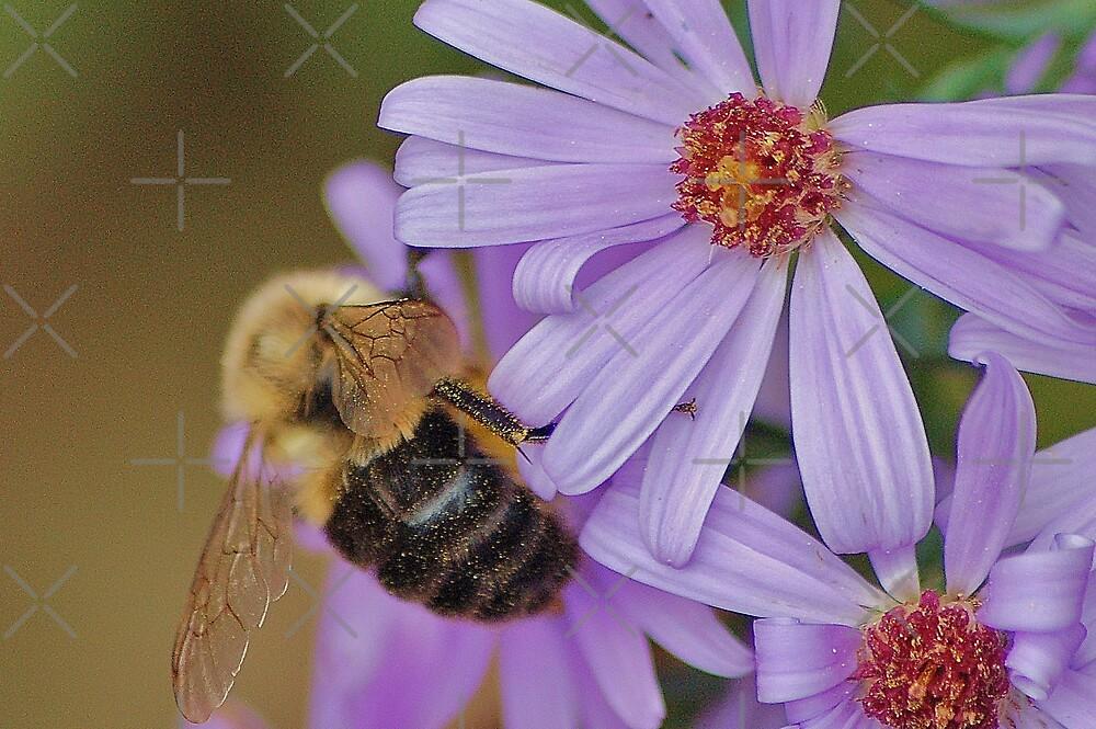 Second Bee feasting by loiteke