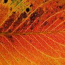 Autumn Colour 1 by Nenad Kostadinovic