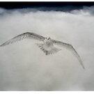 Seagull August 2008 by Leo de Freyne
