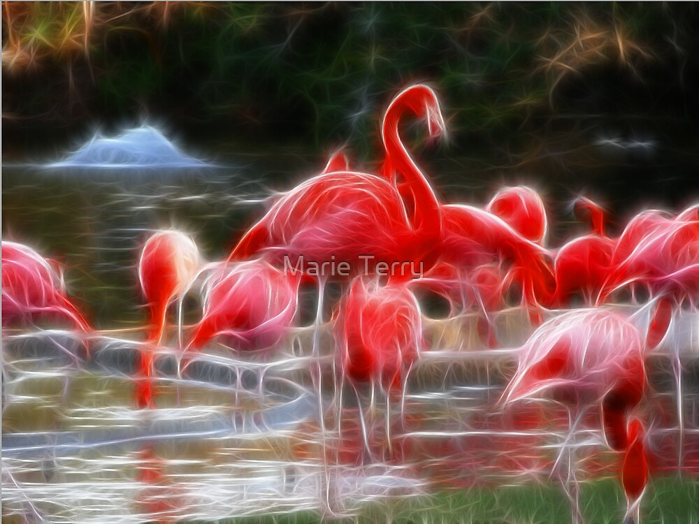 Flamingo Night by Marie Terry