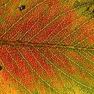 Autumn colours 2 by Nenad Kostadinovic