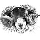 Swaledale Ram by Gavin  Bake