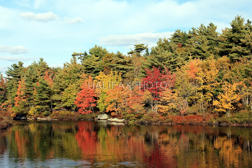 Autumn Pond Scene by HALIFAXPHOTO