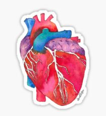 Anatomical Heart Sticker