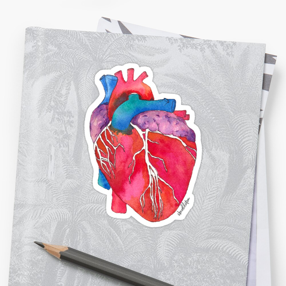 Anatomical Heart Stickers By Sandra Culliton Redbubble