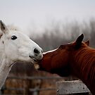 Affectionately Yours by Larry Trupp