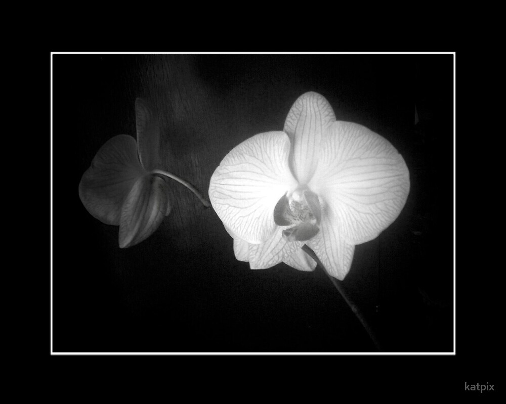 Orchid in Black and White by katpix