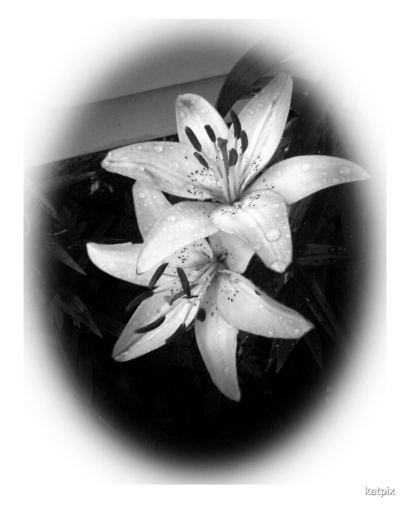 Lily in Black and White by katpix