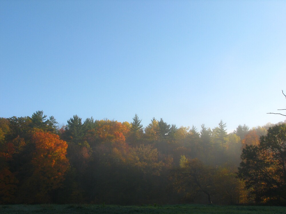 Autumn Morning by JohnEvans