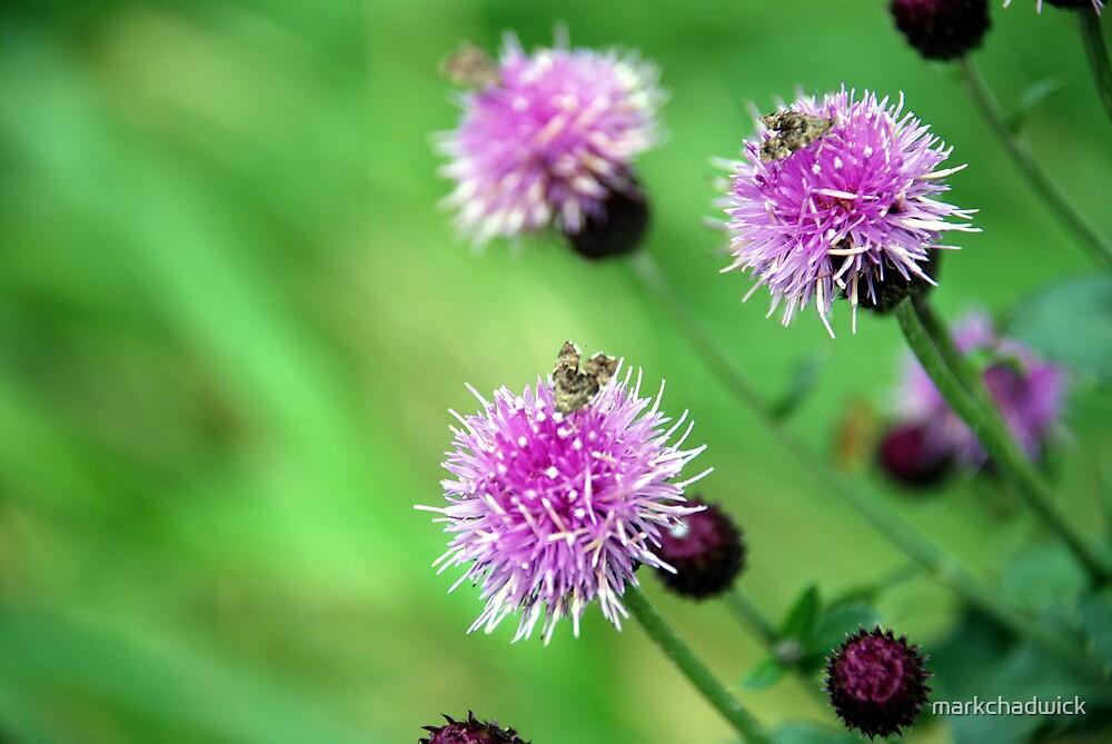 Purple Flowers by markchadwick