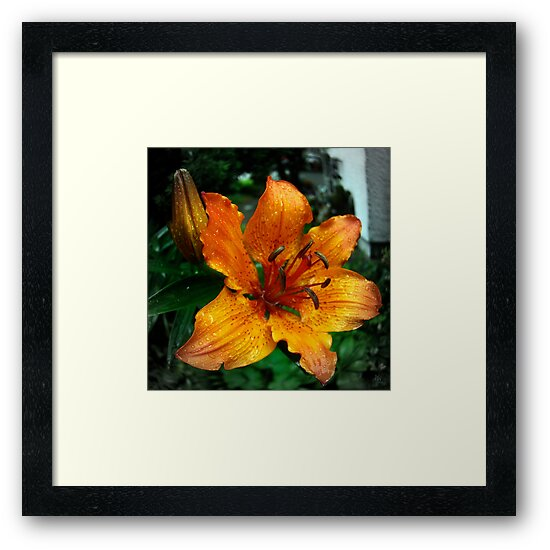 orange lily by NafetsNuarb