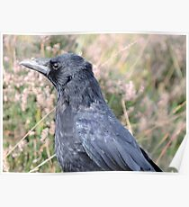 Bore Black Feathers Poster