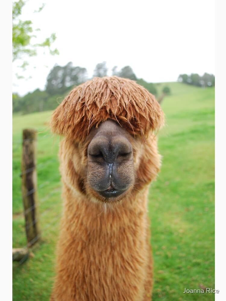 Handsome Hairy fella by JoannaRice