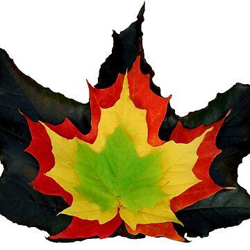 Colours of Fall by dancinfreakshow