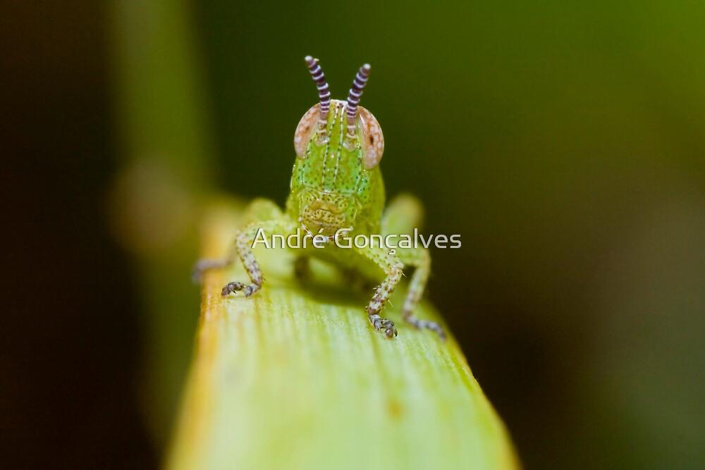 Little Grasshopper by André Gonçalves