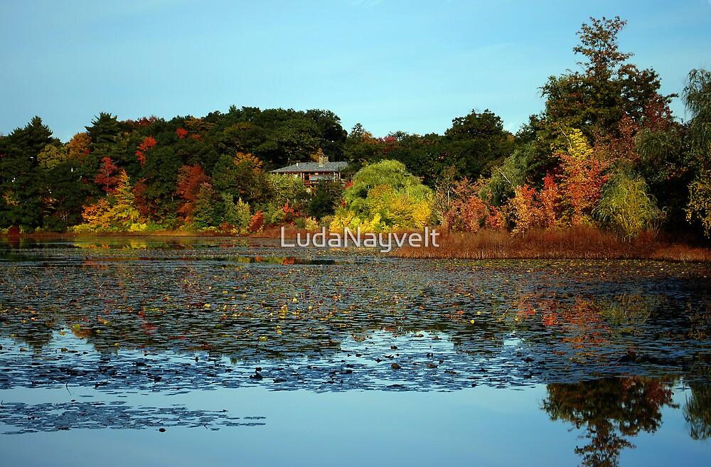 Chesnut Hill, MA by LudaNayvelt