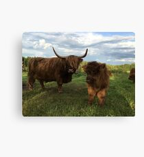 Scottish Highland Cattle Cow and Calf 1185 Canvas Print