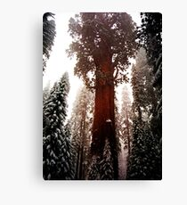 """General Sherman"" Sequoia National Park California Canvas Print"
