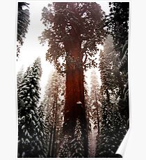 """General Sherman"" Sequoia National Park California Poster"
