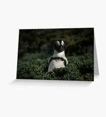 Penguin in the bush Greeting Card