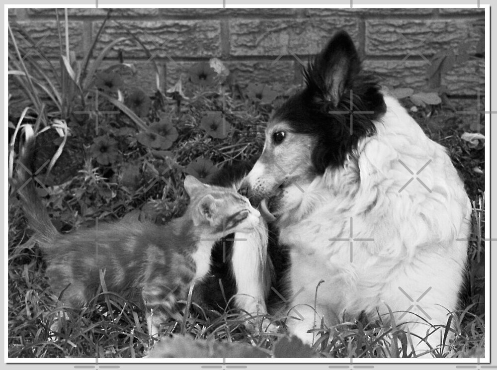 PURRfect Kiss ll by Julie's Camera Creations <><