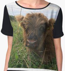 Scottish Highland Cattle Calf 1195 Chiffon Top