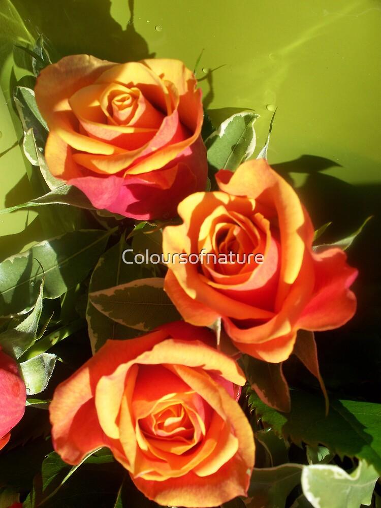 Orange delight trio by Coloursofnature