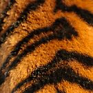 Tiger Stripes by Dave  Knowles