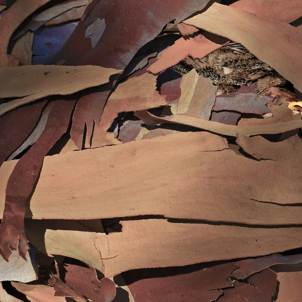 EUCALYPTUS BARK WITH BIRD by Thomas Barker-Detwiler