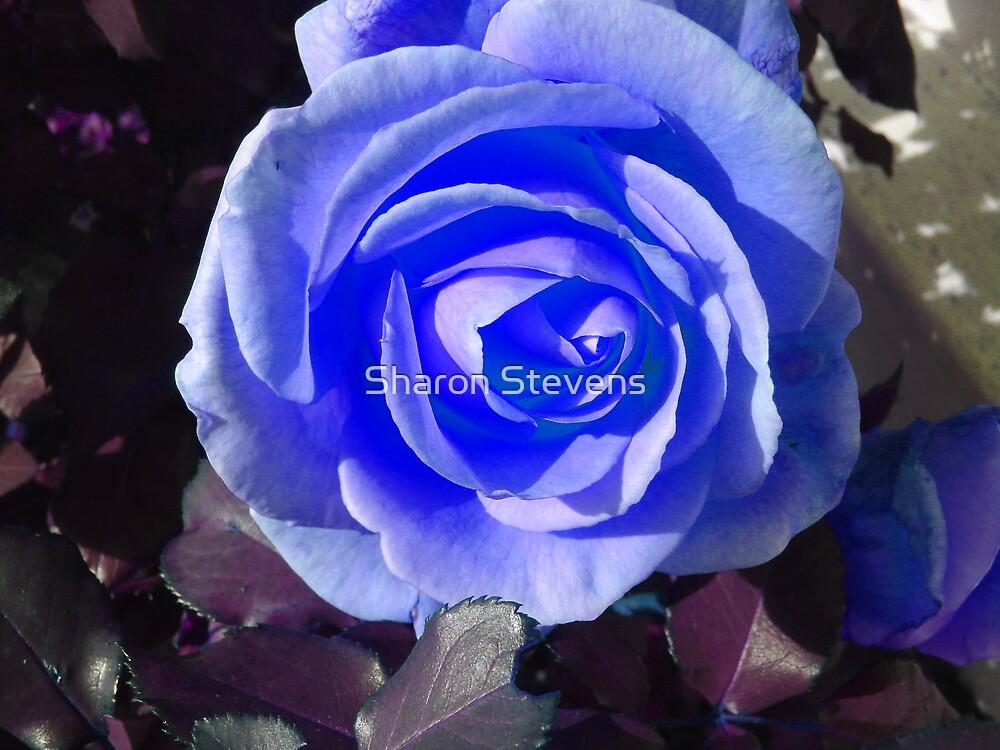 Blue Beauty by Sharon Stevens