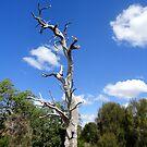 Tree,Stratford,Victoria,Australia 2017 by muz2142