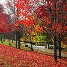 New England Autumn  by Alberto  DeJesus